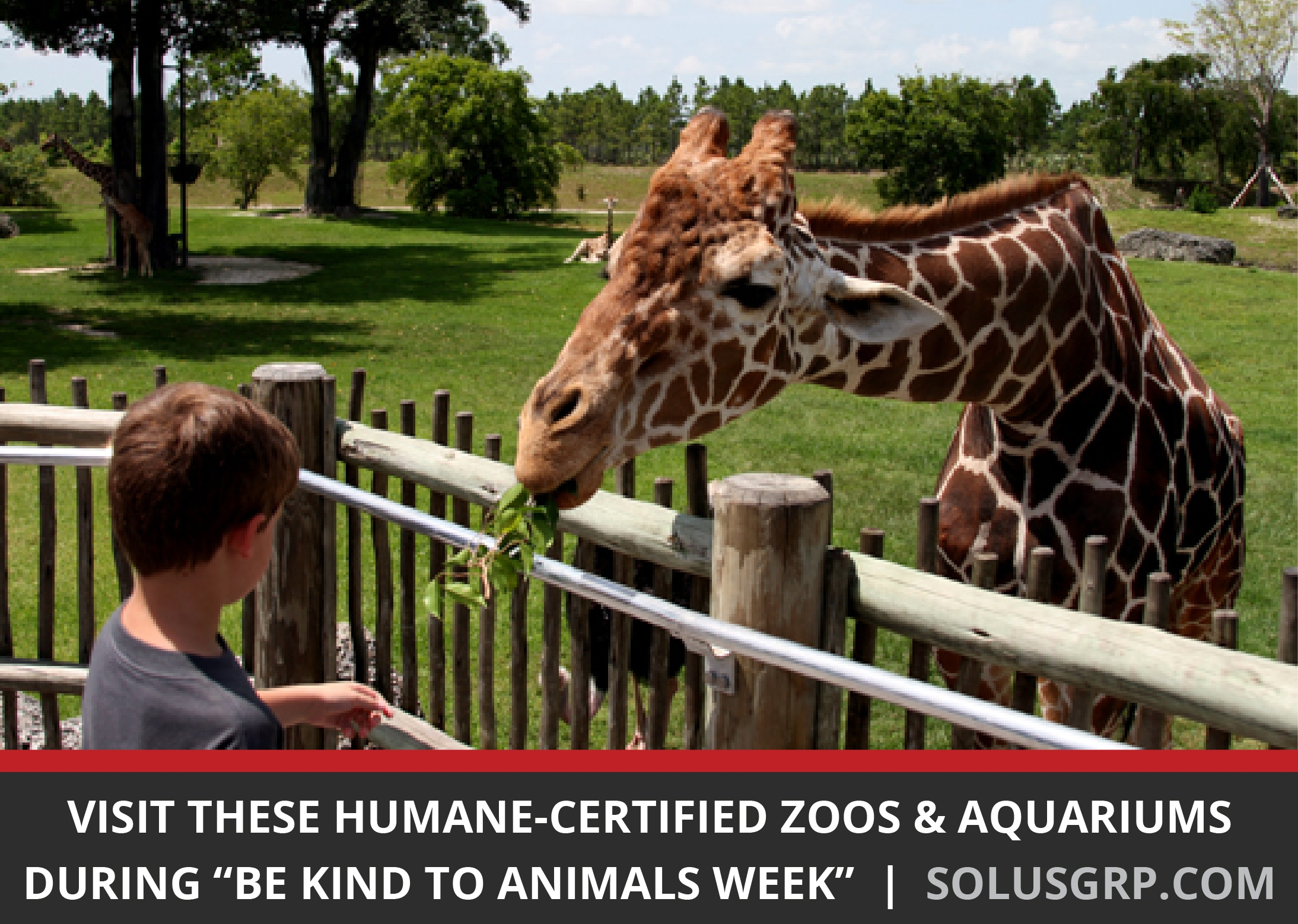 Visit These Humane-Certified Zoos and Aquariums During