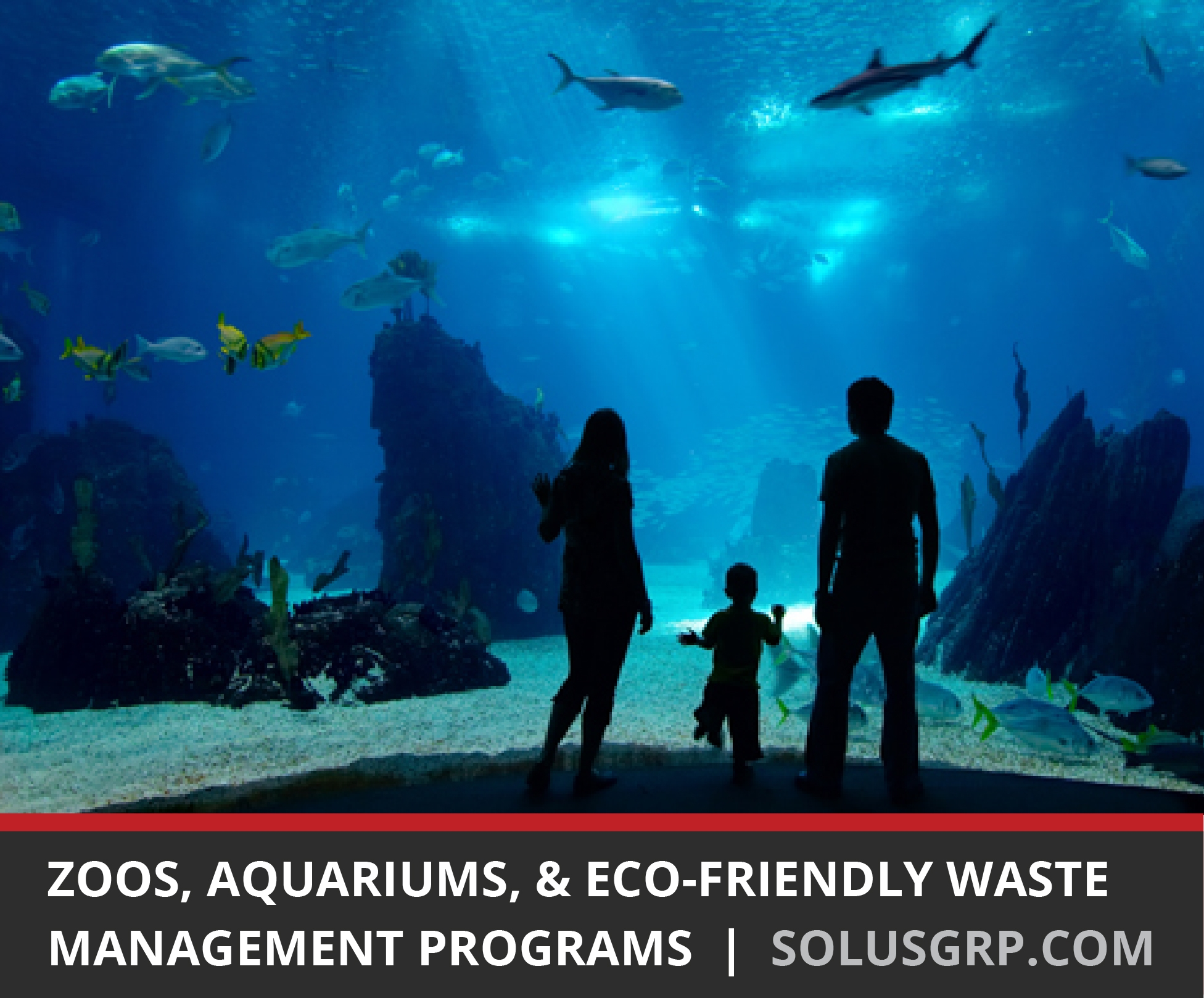 Eco-Friendly Waste Management Programs at Zoos & Aquariums